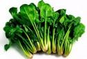 Những lý nên ăn cải bó xôi thường xuyên