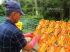 Nhớ hương khô cá lóc đồng đất Tam Nông
