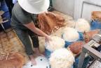 Ớn lạnh làm giá đỗ 'siêu tốc' bằng hóa chất Trung Quốc