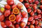 Xuất hiện loại cà chua lạ ở Việt Nam