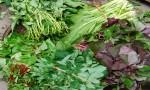 Rau ăn lá là nguyên nhân chính gây ung thư cho người Việt Nam?