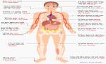 Tuổi thọ của các tế bào trong cơ thể