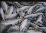 Cách giúp khử mùi tanh của cá biển