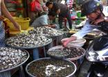 Virus gây tiêu chảy trong một số hải sản tươi sống