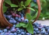 Những loại rau củ chứa chất chống oxy hóa