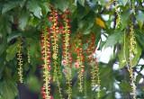 Mẹo chữa tiêu chảy cho trẻ bằng 5 loại lá có sẵn trong vườn