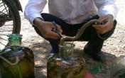 Hướng dẫn cách ngâm rượu rắn