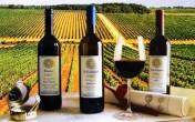 Italy - nước sản xuất rượu vang lớn nhất thế giới