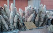 Đặc sản cá sống lạnh buốt răng của Nga