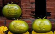 Dừa 'Song Kê' giá tiền triệu mỗi trái