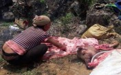 Hàng chục xác lợn chết tím tái, thâm đen bị lấy về ăn