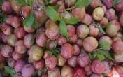 10 lợi ích 'quý như vàng' của trái mận lấn át tác hại