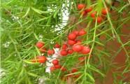 Những bộ phận cần tránh của rau củ vì…có thể gây chết người
