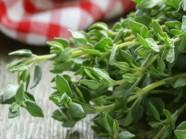 Những lợi ích sức khỏe từ húng tây