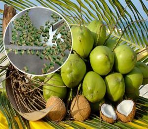 Về Bến Tre nhớ ăn kẹo dừa
