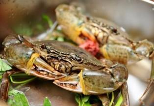 Cách bảo quản cua biển tươi sống khi đi du lịch