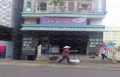 Nhà hàng Cây sung