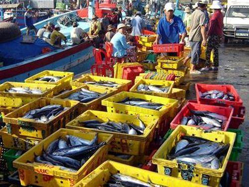 Cá ngừ mùa biển lặng