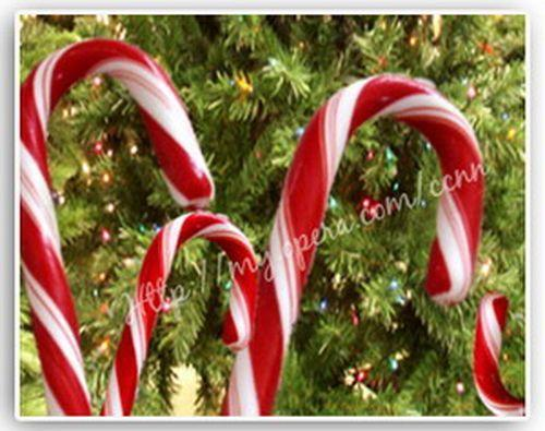 Kỳ thú kẹo gậy Giáng sinh