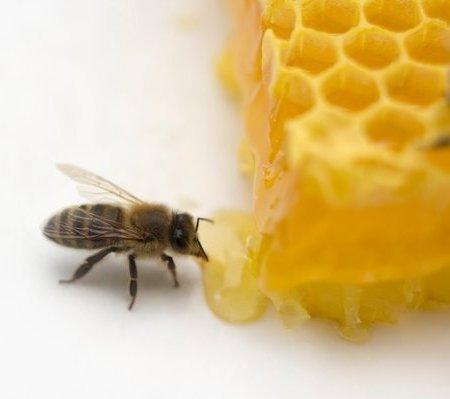 Gia vị - Mật ong