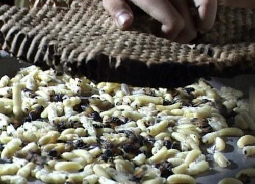 Cháo ong vò vẽ