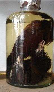 Điều chế và sử dụng rượu bìm bịp