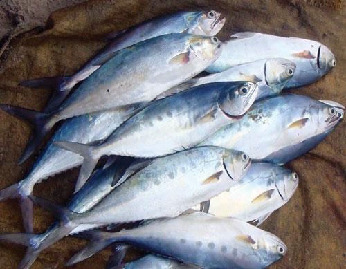 Ăn cá béo có lợi cho sức khỏe