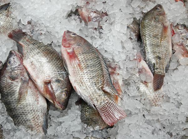 Mẹo tránh ăn phải cá đông lạnh ai cũng phải biết