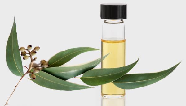 Sử dụng tinh dầu khuynh diệp