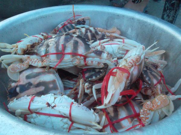 Hải sản biển