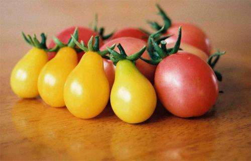 Cà chua bi hình trái lê 2