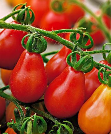 Cà chua bi hình trái lê 3
