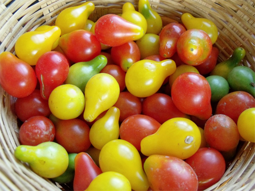 Cà chua bi hình trái lê