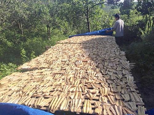 Măng rừng ở La Dạ