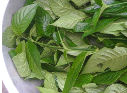 Nhuộm màu bánh trung thu bằng các loại lá tự nhiên 1