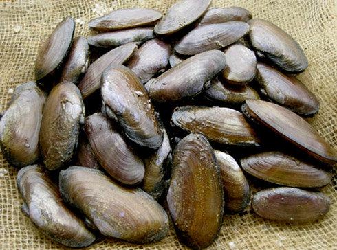 Con phi là một loại hải sản