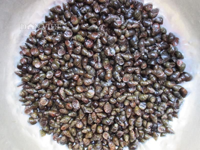 Món ốc quắn nấu chuối 1