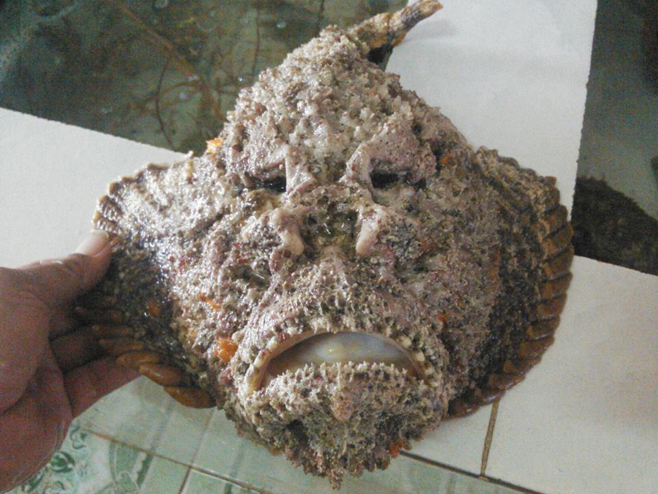 3 món ăn từ cá nhìn phát ghê nhưng ăn lại phát mê1
