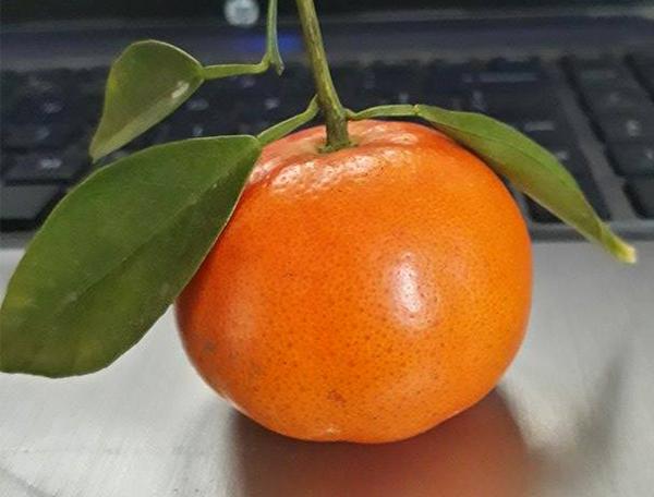 Giúp các mẹ phân việt cam Canh chuẩn ngon và cam Canh Trung Quốc1