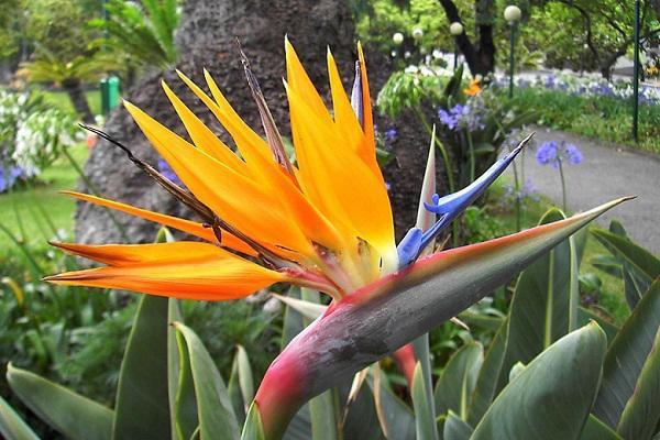 Bất ngờ: Loài hoa thiên yểu đẹp rực rỡ có thể ảnh hưởng đến hệ tiêu hóa3