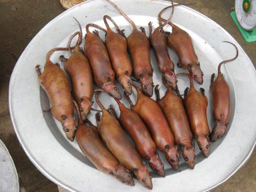 Thịt chuột – Ăn coi chừng đổ bệnh vào người1