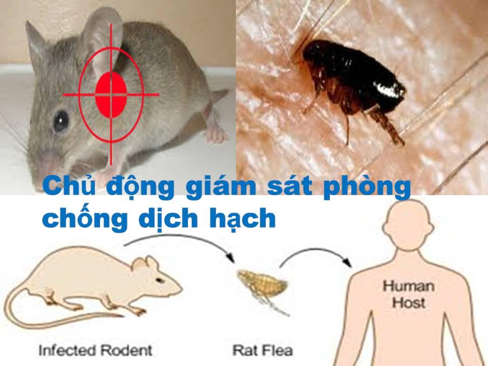 Thịt chuột – Ăn coi chừng đổ bệnh vào người3