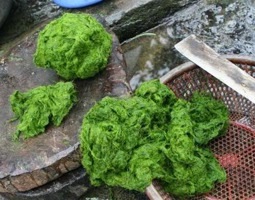 Thử thưởng thức món rêu nướng – Đặc sản của người Tày ở tỉnh Hà Giang2