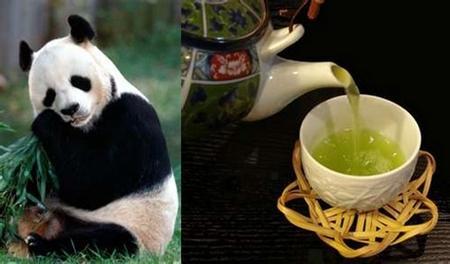 Một tách trà bón bằng phân gấu trúc có giá hơn 203 USD.