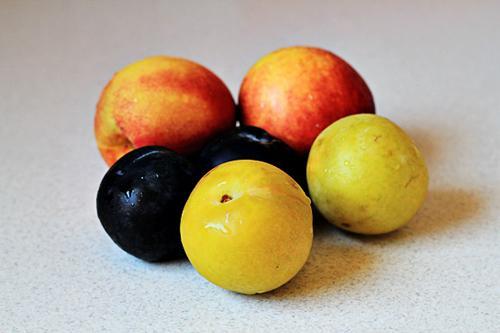 Hoa quả rửa sạch, cắt làm đôi sau đó bổ miếng nhỏ vừa ăn, bỏ phần hạt.