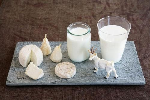 Canxi trong sữa dê có tác dụng đốt mỡ sau bữa ăn