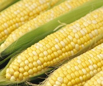 Hướng dẫn: Những Lợi Ích và Các Món Ăn Ngon Từ Bắp