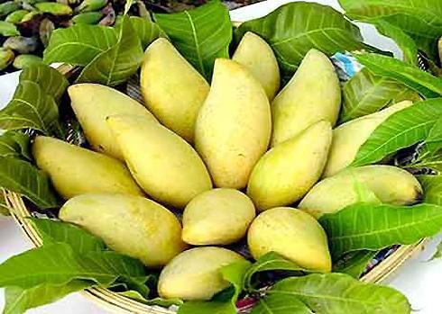 Xoài cát Hòa Lộc là một thương hiệu trái cây nổi tiếng ở Nam bộ từ rất lâu. Hòa Lộc là tên cũ của xã Hòa Hưng, huyện Cái Bè, tỉnh Tiền Giang bây giờ. Đây là vùng đất phù sa ven sông nên rất nhiều chất dinh dưỡng cho thân cây xoài cát.