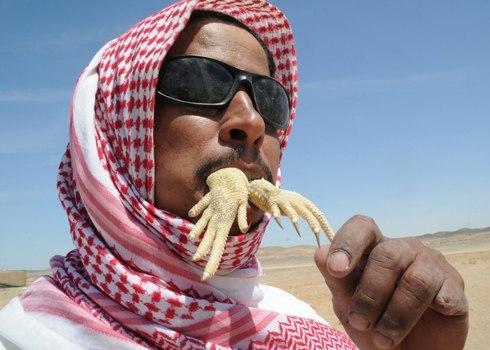"""Một người đàn ông Ả Rập Saudi kêu răng rắc trên tay của một con thằn lằn Uromastyx, một con vật có máu được cho là chữa bệnh và tăng cường cơ thể. Còn được gọi là """"dabb thằn lằn"""", các loài bò sát nhỏ thường được đánh bắt bởi móc hoặc chó và được hưởng như một món ăn ở nhiều nơi của Trung Đông."""