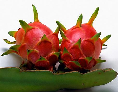 Thanh long hiện nay là một đặc sản trái cây nổi tiếng của Bình Thuận nói riêng, cả nước nói chung. Tại đây, những cây Thanh long mọc lên trong nắng gió đẹp vô cùng. Công ty Thanh long Hoàng Hậu với trên 100ha đất trồng Thanh long. Trang trại này nằm giữa thung lũng của núi Tà Cú. Vào mùa Thanh long chín, nhìn rừng cây Thanh long bạt ngàn nơi đây với hàng trăm ngàn trái đỏ hồng đẹp lạ lùng.